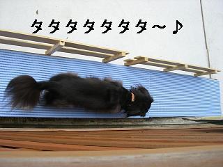 CIMG0139_20081018205140.jpg