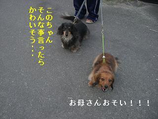 CIMG0141_20090526203649.jpg