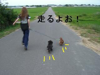 CIMG0142_20090526203535.jpg