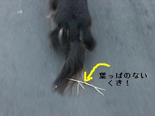CIMG0153_20090526203711.jpg