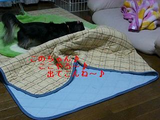 CIMG0158_20090206211003.jpg