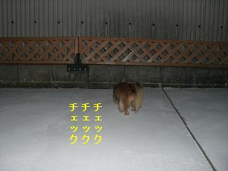 CIMG0173.jpg