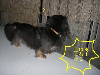 CIMG0178_20081008212221.jpg