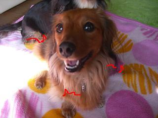 CIMG0191_20090211195758.jpg