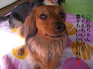 CIMG0196_20090211200055.jpg