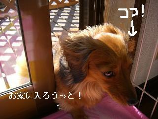 CIMG0199_20090211200349.jpg
