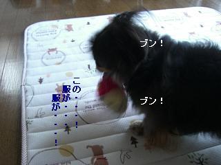 CIMG0244_20090613203052.jpg