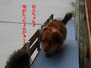CIMG0328_20090301192430.jpg