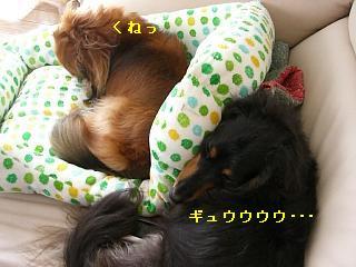 CIMG0374_20090719172926.jpg