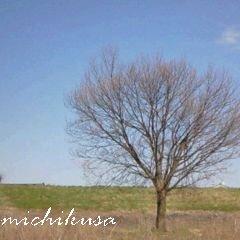 090410tree