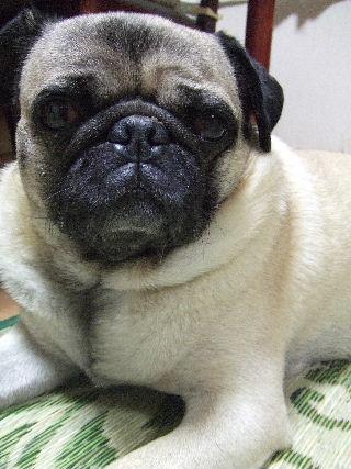 2009_0708犬7月20018