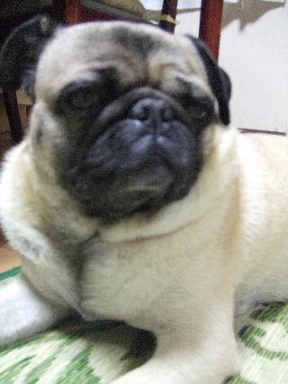 2009_0708犬7月20016