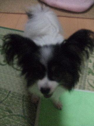 2009_0721犬7月30070