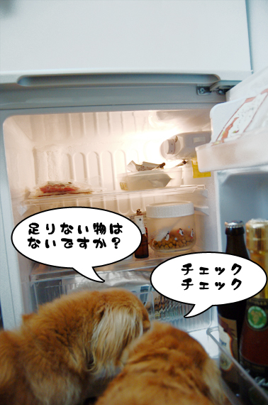 冷蔵庫2_20090205