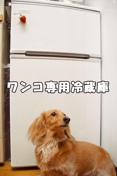 冷蔵庫4_20090205