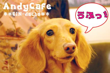 A-Cafe_3-2_20081109.jpg