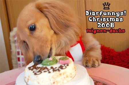 D-mignon-Christmas_20081224.jpg
