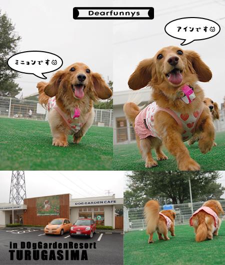 DogGardenResortTURUGASIMA.jpg
