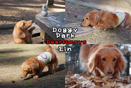 DoggyPark-E1_20090410.jpg