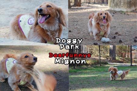 DoggyPark-M1_20090410.jpg