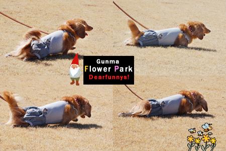 FlowerPark3_20090315.jpg
