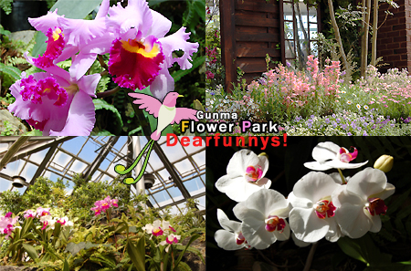 FlowerPark4_20090315.jpg