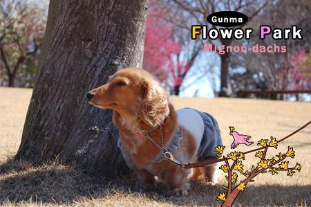 FlowerPark7_20090315.jpg