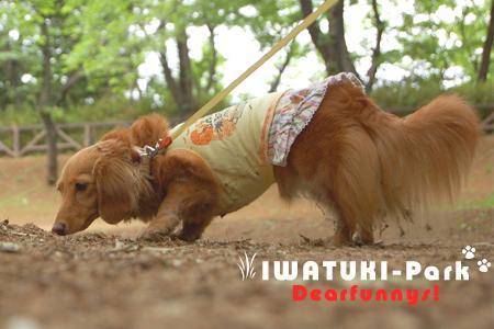 IWATUKI-P1_20090505.jpg