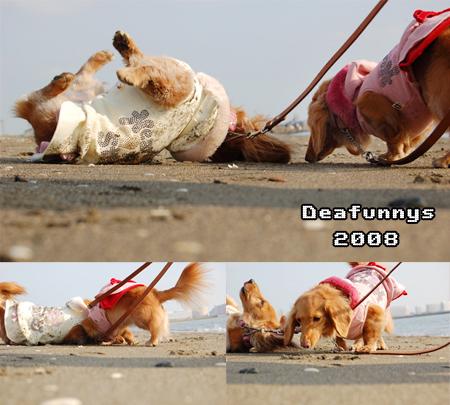 Kaihin-Park_dearfunnys3_20081214.jpg