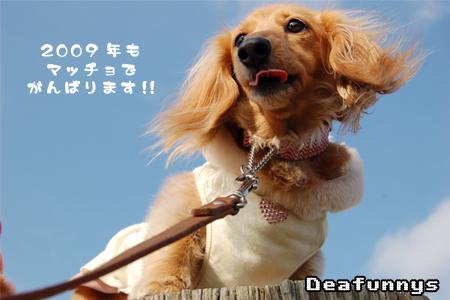 Kaihin-Park_mignon1_2008121.jpg