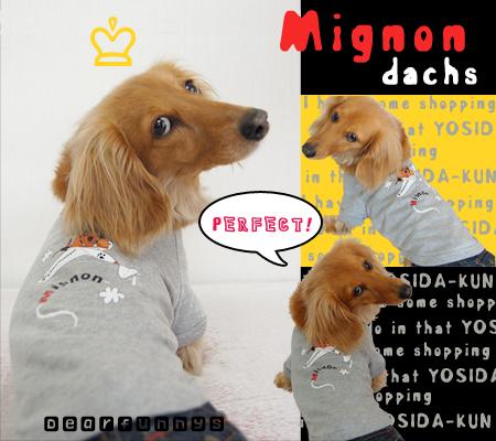 Mignon-yosidakun_20090419.jpg