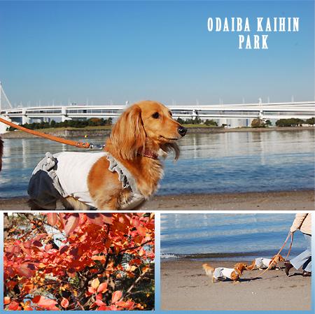 ODAIBA_KAIHIN-park4_2008112.jpg