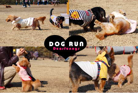 Park3Dogrun_20090207.jpg