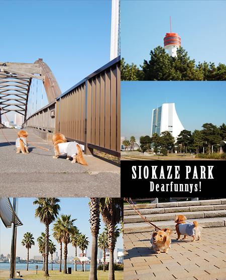 SIOKAZE_PARK_20081129.jpg