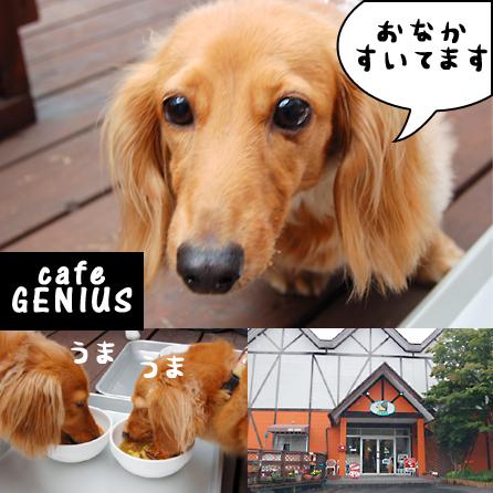 cafeGENIUS_20090718.jpg