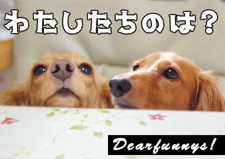dearfunnys_20080906.jpg