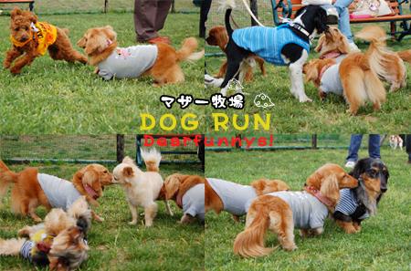 dogrun1_20090516.jpg