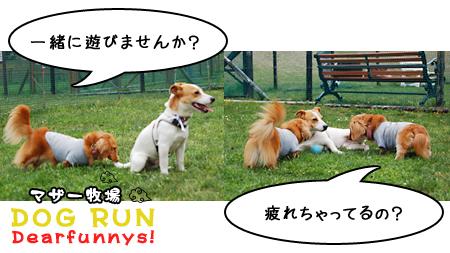 dogrun2_20090516.jpg