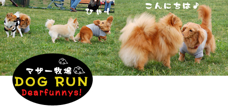 dogrun3_20090516.jpg