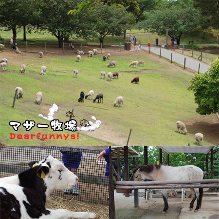 farm1_20090516.jpg