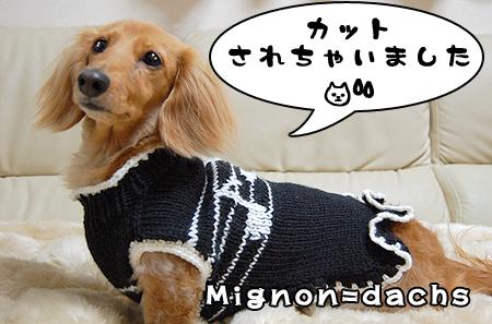 mignon-1_20090127.jpg