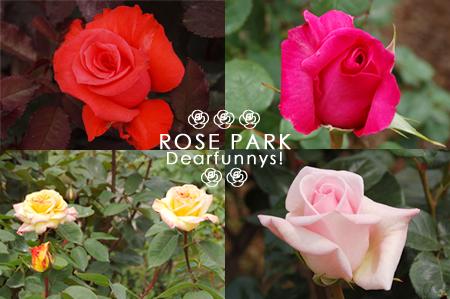 rosepark2_20090504.jpg
