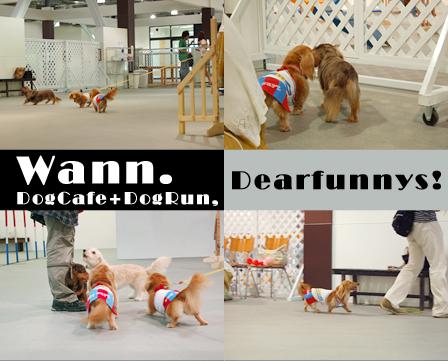 wann_dogrun1_20080824.jpg