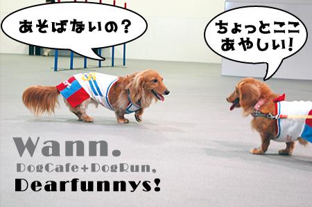 wann_dogrun2_20080824.jpg