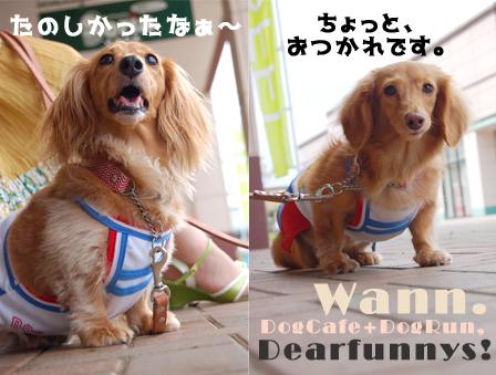 wann_dogrun3_20080824.jpg