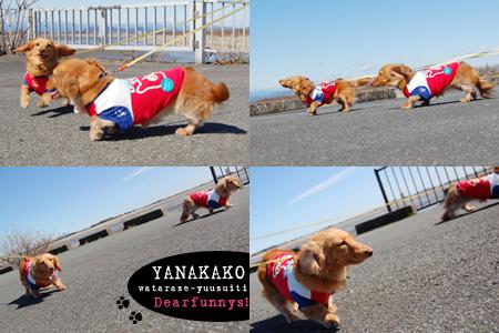 yanakako5_200900307.jpg