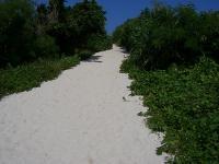砂山ビーチへ続く道