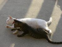 一緒に猫パンチ