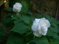 ぽぷりの庭2