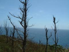 葉っぱの付かない風に向かって頑張る木